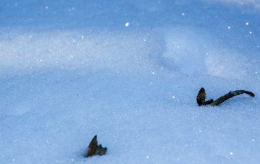 winter-blatt im schnee